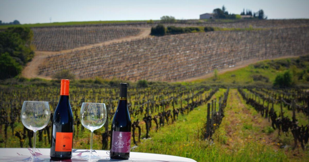 Collation au coeur des vignes - Vignovins - 2