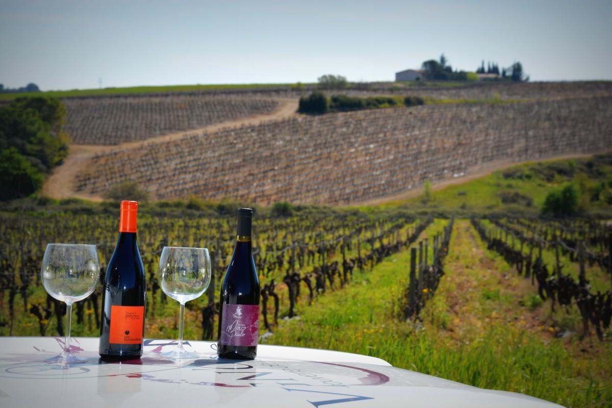 Collation au coeur des vignes - Vign'O vins - 2