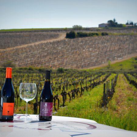 Circuit Saint-christol - Vign'O vins